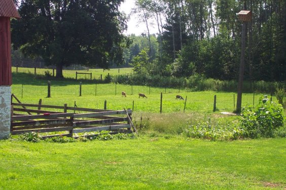 Green Pastures of Frog Hollow