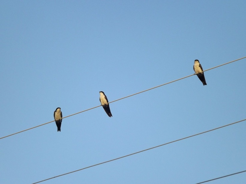 Birds chirping